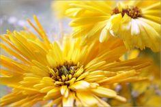 Emotion-Art - Sommerblumen