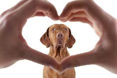 Adorable pet photo session idea. | photographer Barna Tanko | Dog | Photography | Family | Puppy