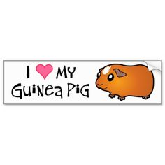Cartoon Smooth Guinea Pig (red crested) Bumper Stickers
