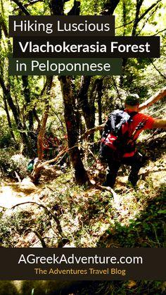 Hiking Luscious Vlachokerasia Forest in Peloponnese.