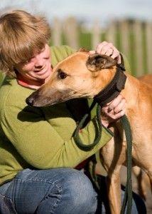 GAP foster carer, Gail Marquet, picks up her next hound