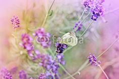 Stampa su tela Butterfly on lavender. #stampa su #tela