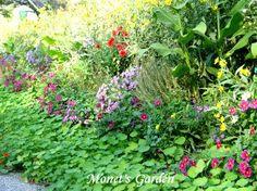 monet garden - Google Search