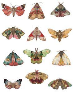 Printing up a fresh batch of moth prints today! All 12 days on one print -. - Carola : Printing up a fresh batch of moth prints today! All 12 days on one print -. Poses References, Art Inspo, Art Inspiration Drawing, Art Reference, Art Drawings, Pencil Drawings, Art Photography, Illustration Art, Butterfly Illustration