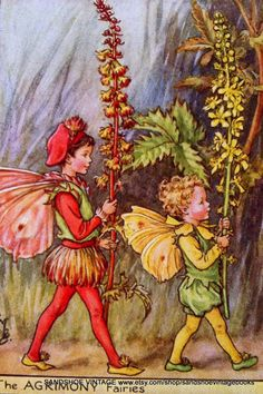 1930s AGRIMONY FAIRIES Cicely Mary Barker by sandshoevintageprint,