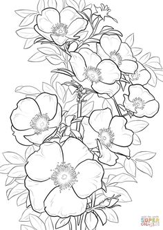 Drawing Roses Cherokee Rose Coloring page from Roses category. Select from 20890 printable crafts of cartoons, nature, animals, Bible and many more. Rose Coloring Pages, Adult Coloring Pages, Coloring Books, Free Coloring, Flower Mandala, Flower Art, Cherokee Rose, Flower Sketches, Drawing Flowers