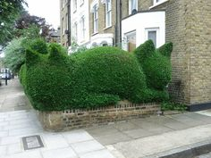A fabulous cat hedge, found and sent to us by one of our Pinterest followers.