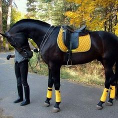 Black+yellow =perfect