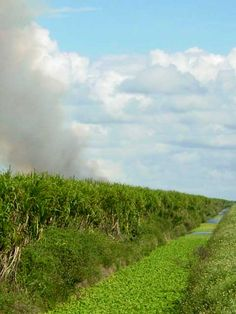 A burning cane field? Which book is this in, Yokche or Kill Devil and why is it burning? Writing Process, Book Stuff, Devil, My Books, Country Roads, Outdoor, Outdoors, Outdoor Games, Outdoor Living