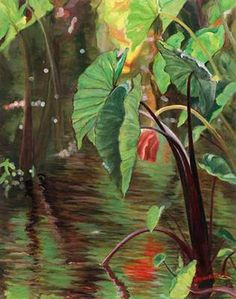 """Original Oil Painting """"Red Taro"""", Oil on Canvas by Sarah Howard at Maui Hands"""