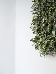 into leaf - cereal // Sophie Green Garden, Green Plants, Fresh Flowers, Wild Flowers, Cereal Magazine, Plants Are Friends, Green Life, Outdoor Plants, Ficus