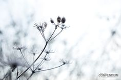 365 Tage Fotochallenge: Tag 343 - Meine frostige Bilderserie