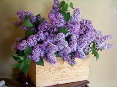 Still my favorite flower arrangement! Lilacs in a wine crate