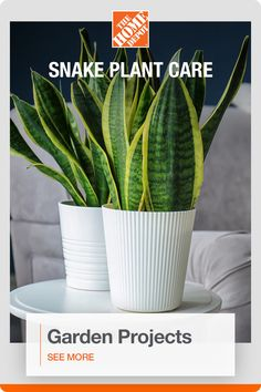 Start your next garden or plant project with everything you need from The Home Depot brought to your door. Snake plants are one of the easiest indoor plants to grow and suitable for different decor styles, from farmhouse to modern. This houseplant requires low light and infrequent waterings, which is great if you want to test out your green thumb. Click to get started.