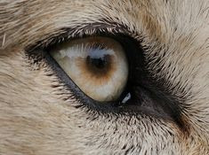 White Wolf: The incredibly detailed photos that reveal animal eyes in extreme close-up