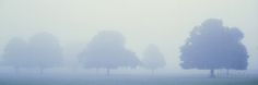 Trees In Mist Poster par Jeremy Walker sur AllPosters.fr