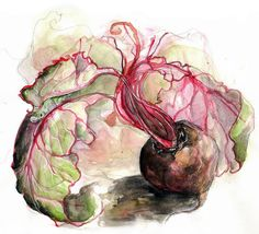 She has so much stuff, and it's all so beautiful! Perfect for a series of prints... Beetroot Study V by Amy Holliday, via Flickr