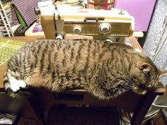 """This is Diane Richard's """"Baby"""" who's guarding the sewing machine. She knows where Diane wants to be. :)"""