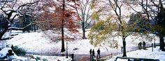 Central Park in Winter http://www.walls360.com/seasons-wall-graphics-s/2002.htm