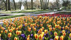 Aperto pochi giorni l'anno, solo durante la fioritura, è il parco floreale più bello del mondo