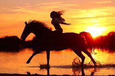 - Art Of Equitation Cute Horses, Pretty Horses, Horse Love, Most Beautiful Horses, Animals Beautiful, Cute Animals, Horse Girl Photography, Equine Photography, Horse Photos