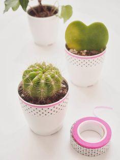 oh my cactus