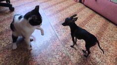 Забавные животные.  Первый контакт