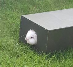 Wooden 'Moult & Bolt' hideout box shelters for rabbits, designed to help remove shed fur from your bunnies, handmade to order from Furniture For Rabbits