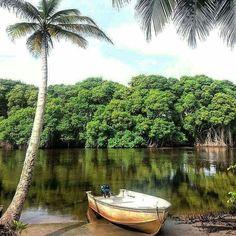 Manzanilla Trinidad near the river mouth