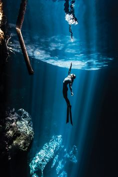 Grace and beauty under the sea at Mexico's Riviera Maya • photo: Christian Vizl on Scuba Diving dot com