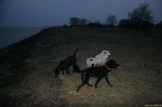 Leuchthalsband LEUCHTIE für Hunde in Aktion in Dänemark // LED light collar LEUCHTIE for dogs in action in Denmark