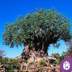 #momentoEnjoy15  El árbol de la vida
