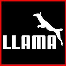 LLAMA (Camelid Pack Animal Incas Funny) PARODY T-SHIRT Llama Plush, Llama Alpaca, Llama Face, Llama Arts, Animal Tails, Animal Captions, American Animals, No Drama, Happy Words