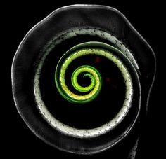 Spiral in Nature - Eddie Mun Hoe Chan