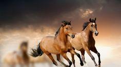 Wallpaper horse, running, grass, clouds