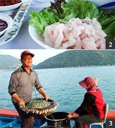 [고흥 갯장어] 갯장어는 일본 사람들이 여름 별식 중 최고로 여기는 생선이다. 입맛 까다로운 일본 사람들이 세계에서 제일 맛있는 갯장어로 고흥산을 꼽는다. 갯장어를 맛보러 고흥으로 간다.