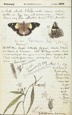 Page from a diary showing illustrations of butterflies.