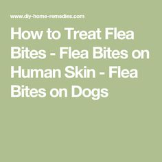 How To Treat Flea Bites On Humans Naturally