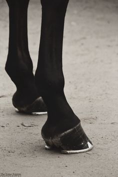 Blowing Rock Charity Horse Show. 8.2.14. | Stunning photo of Horse legs/hooves......
