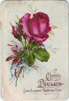 CHOCOLAT POULAIN - ROSE SPRAY - PINK by patrick.marks, via Flickr