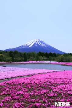 Mt.Fuji--- I am going to climb this next summer