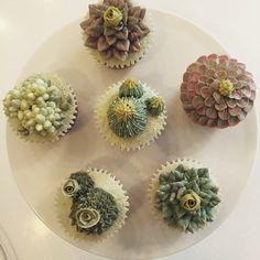 다육이  #플라워케이크 #컵케익 #다육이 #다육컵케익 #마이디어 #마이디어케이크 #flowercake #cupcakes #cactus #plant #mydearcake #baking #cake #선인장 #광교 #수원 #영통