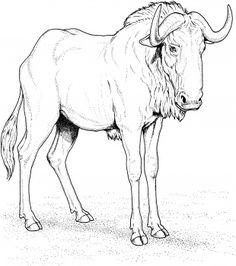 wildebeest - Google Search