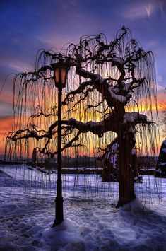 Tree Of Patience. In time all things become clear. Living in the moment ~