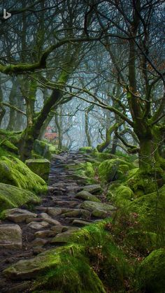 Forest path in Padley Gorge, Derbyshire, England (c: James Mills/500 px)