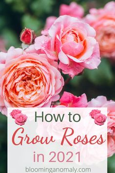 Beautiful Flowers Garden, Amazing Flowers, Garden Yard Ideas, Garden Art, Red Roses, Pink Flowers, Cheap Landscaping Ideas, Rose Care, Types Of Roses