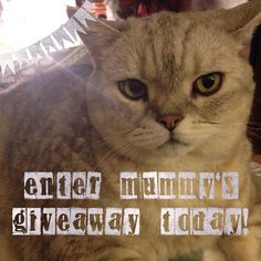 King Murphy has a #message for you  Enter here: http://ift.tt/1PND2F0  #giveaway #gifts #goteamflourish #free #freebie #fabulous #art #arty #artist #community #creative #life #love #loveit #lovemyjob #cats #catstagram #catlady #catlover #catsofinstagram