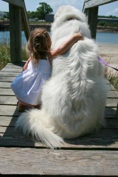 Little girl with her Great Pyrenees