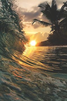 Into the night ~ Palm Beach by Vitaliy Sokol