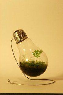 Cómo hacer un jardín dentro de una bombilla | Aprender manualidades es facilisimo.com
